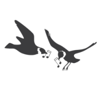 Jackdaws Birds