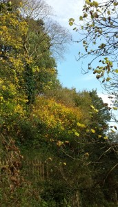 Autumn at Jackdaws