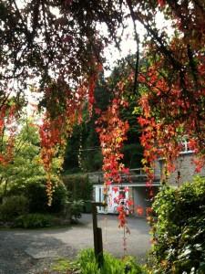 Jackdaws Autumn 2015