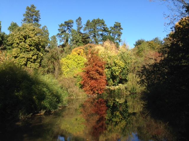 Jackdaws in Autumn